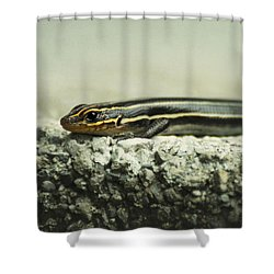 Portrait Of A Young Skink Shower Curtain by Rebecca Sherman