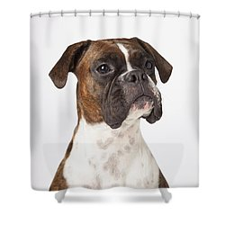 Portrait Of Boxer Dog On White Shower Curtain by LJM Photo