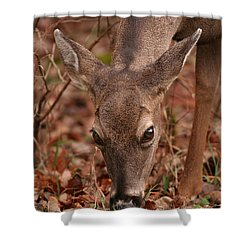 Portrait Of  Browsing Deer Two Shower Curtain
