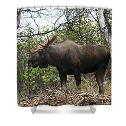 Shower Curtain featuring the photograph Poser by Doug Lloyd