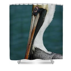 Shower Curtain featuring the photograph Posing For The Tourists by Vivian Christopher
