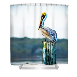 Shower Curtain featuring the photograph Posing Pelican by Shannon Harrington