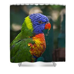 Shower Curtain featuring the photograph Posing Rainbow Lorikeet. by Clare Bambers