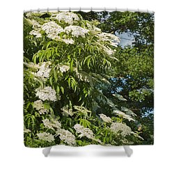 Potchen's Cascade Shower Curtain