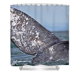 Shower Curtain featuring the photograph Powerful Fluke by Don Schwartz