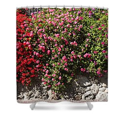 pr 356 Wallflowers Shower Curtain by Chris Berry