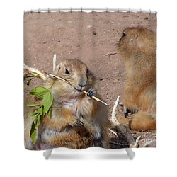 Prairie Dogs Shower Curtain by Methune Hively