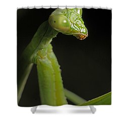 Praying Mantis Shower Curtain by Art Whitton