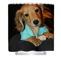 Precious Puppy Shower Curtain by Diana Haronis