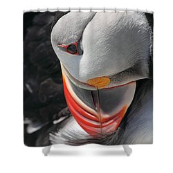 Preening Puffin Shower Curtain by Bruce J Robinson