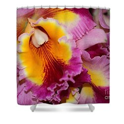 Pretty And Colorful Orchids Shower Curtain by Sabrina L Ryan