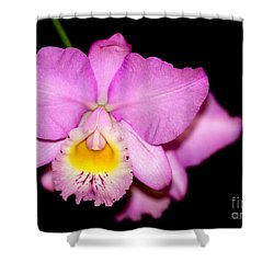 Pretty In Pink Orchid Shower Curtain by Sabrina L Ryan
