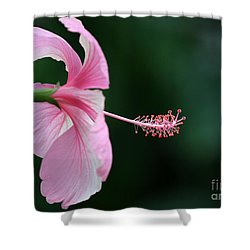 Pretty Pink Hibiscus Shower Curtain by Sabrina L Ryan