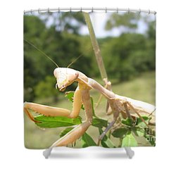 Preying Mantis Shower Curtain by Mark Robbins