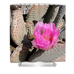 Prickly Pear Cactus Fertilized By Honey Bee Shower Curtain by Gary Whitton