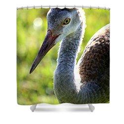 Prince Sandhill Shower Curtain by Carol Groenen