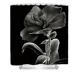 Princess Flower In Black And White Shower Curtain