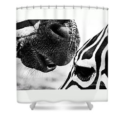 Shower Curtain featuring the photograph Promises by Traci Cottingham