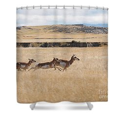 Shower Curtain featuring the photograph Pronghorn Antelopes On The Run by Art Whitton