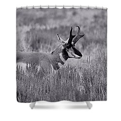 Shower Curtain featuring the photograph Pronghorn  by Eric Tressler