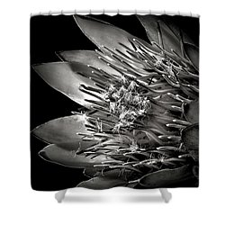 Protea In Black And White Shower Curtain