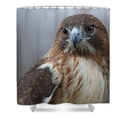Proud Prince Of The Skies Shower Curtain by Richard Bryce and Family