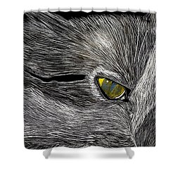 Prowl Shower Curtain