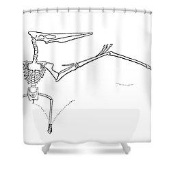 Pteranodon Longiceps Shower Curtain by Science Source
