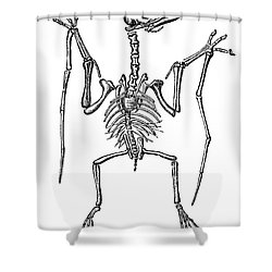 Pterodactylus, Extinct Flying Reptile Shower Curtain by Science Source