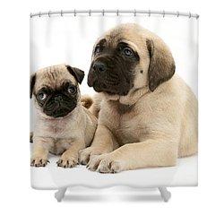 Pug And English Mastiff Puppies Shower Curtain by Jane Burton