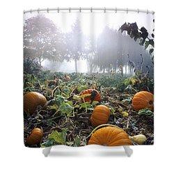 Pumpkin Patch, British Columbia Shower Curtain by David Nunuk