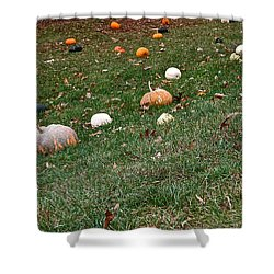 Pumpkins Shower Curtain by Susan Herber