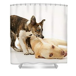 Pup Biting Lab On The Ear Shower Curtain by Mark Taylor