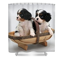 Puppies In A Trug Shower Curtain by Jane Burton