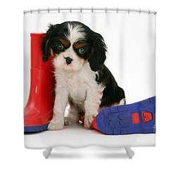 Puppies With A Childs Rain Boots Shower Curtain by Jane Burton