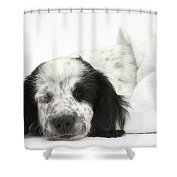 Puppy Sleeping In Christmas Hat Shower Curtain by Mark Taylor
