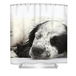 Puppy Sleeping Shower Curtain by Mark Taylor
