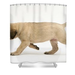 Puppy Trotting Shower Curtain by Jane Burton
