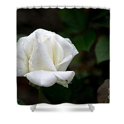 Pure As Snow Shower Curtain by Living Color Photography Lorraine Lynch