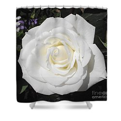 Pure White Rose Shower Curtain