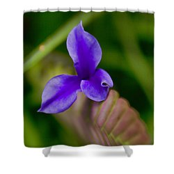 Purple Bromeliad Flower Shower Curtain by Douglas Barnard