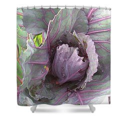 Purple Cabbage  Shower Curtain