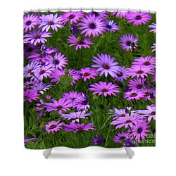 Purple Daisies Square Shower Curtain by Carol Groenen