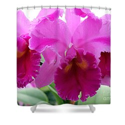 Shower Curtain featuring the photograph Purple Explosion by Debbie Hart