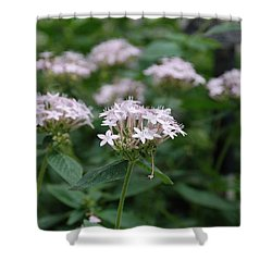 Purple Flower Shower Curtain by Jennifer Ancker