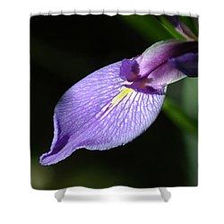 Japanese Iris Petal Shower Curtain