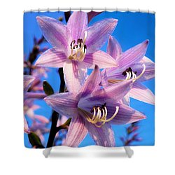Shower Curtain featuring the photograph Purple Hosta Blooms by Davandra Cribbie