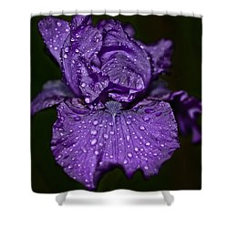 Purple Iris With Water Drops Shower Curtain