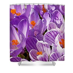 Purple Oh Purple Shower Curtain