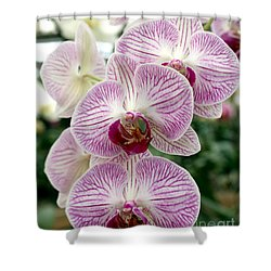 Shower Curtain featuring the photograph Purple Orchids by Debbie Hart